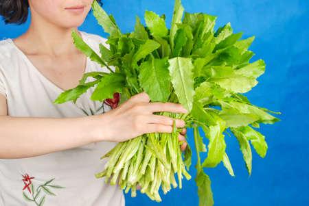 Lettuce Stock Photo - 14154217