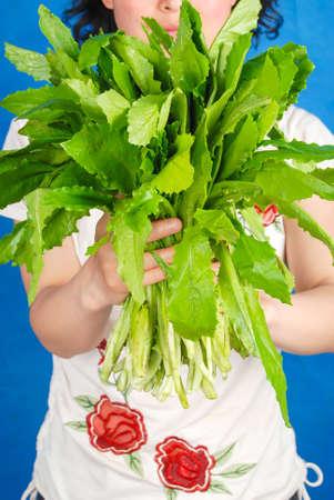 Lettuce Stock Photo - 14154248