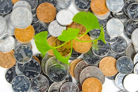 Plant in coins photo