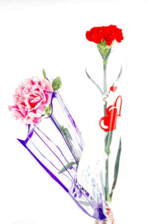 Carnation Stock Photo - 14328470