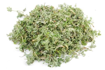 White artemisia Stock Photo