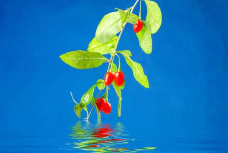 wolfberry: Wolfberry