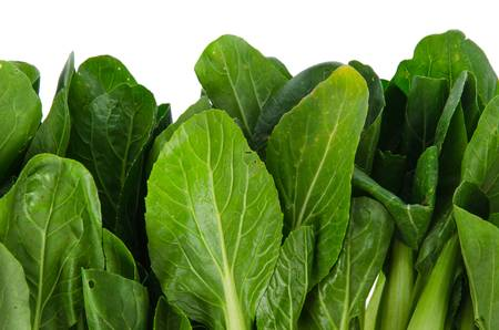 rapa: Bok chouyy Chinese cabbage