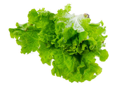 vibrat color: Fresh lettuce