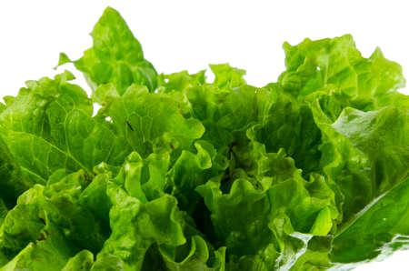 vibrat: Fresh lettuce