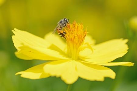 bee on flower Stock Photo - 21046632