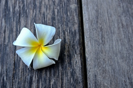plumeria flower or Lei Flower on wood texture photo