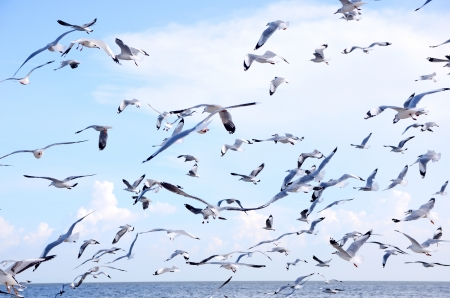 seagulls in action flying on the blue sky photo