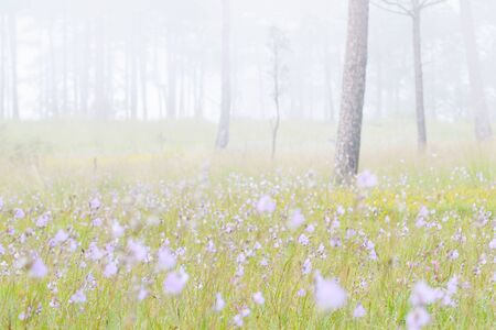 dao: forest in the mist at Phu Soi Dao national park  Thailand Stock Photo