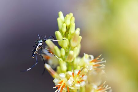 close up Mosquitoes eat flowers in nature