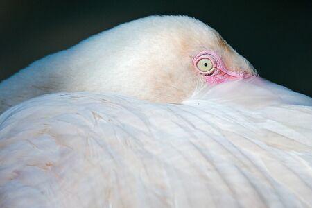 close up  action Flamingo bird in thailand 스톡 콘텐츠