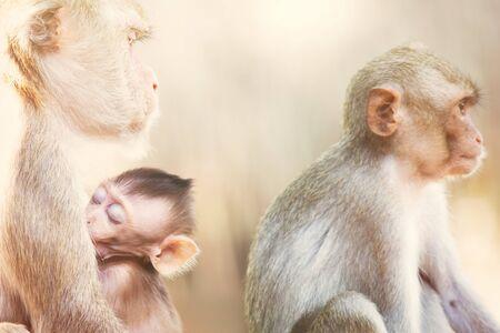Familia de monos en la naturaleza de la selva de Tailandia