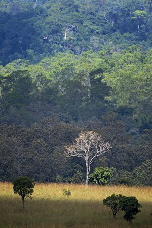 Forest in nature The edge of Thailand at Khao Yai