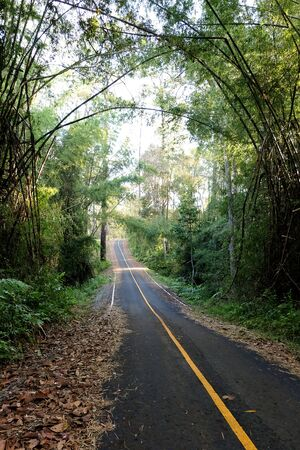 Roads and pine trees in Thung Salaeng Luang forest