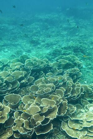 Coraline algae and corel in the cockburn Island, Myanmar