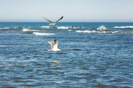 Dawn on the sea. Flying seagulls on blue sea and sky background Foto de archivo