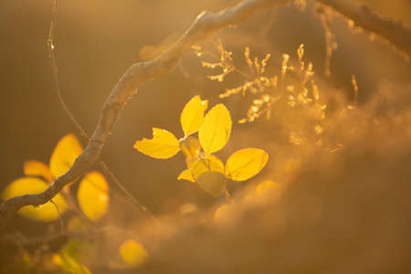 Beautiful yellow autumn leaves in forest in fall. Close-up image. Natural background Фото со стока - 132803059