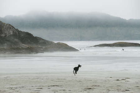 Dog running on beach in fog Stock Photo