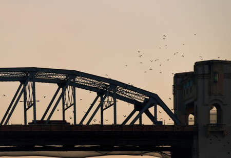 Bridge with birds and golden sky while sunset