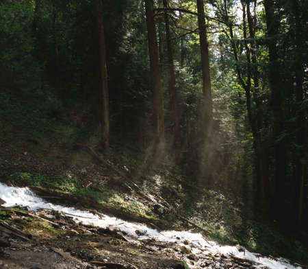 river with sunrays through trees Stok Fotoğraf