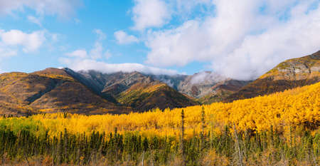 Seasonal color of landscape with forest, mountains and rivers in autumn colors in Alaska during sunset