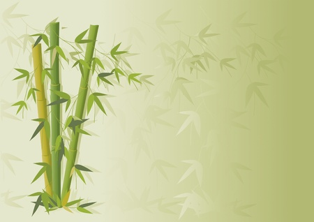 A clump of bamboo with many branches and leaves to   use background