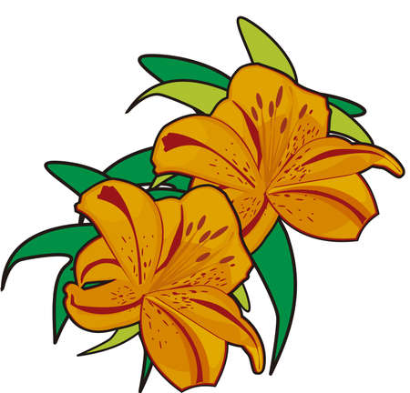 Lily - An illustration of two orange lilies and still green leaves.
