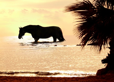 the horse in marine sunset Stock Photo