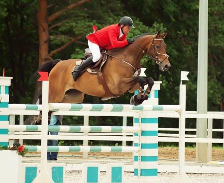 gelding: equestrian jumping sport  Editorial