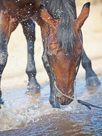 caballo bebe: retrato de la natación caballo bayo
