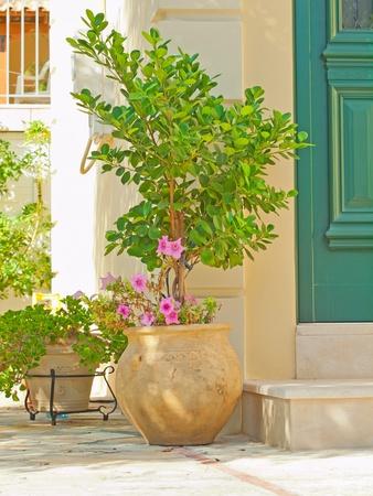 greek pot: tradizionale vaso greco con boccola Archivio Fotografico