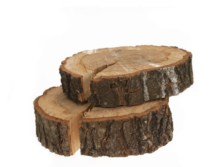 Cross section of tree trunk showing growth rings on white background  Stock Photo