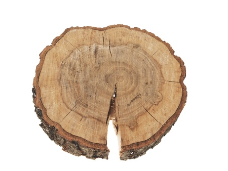 Cross section of tree trunk showing growth rings isolated on white  Standard-Bild