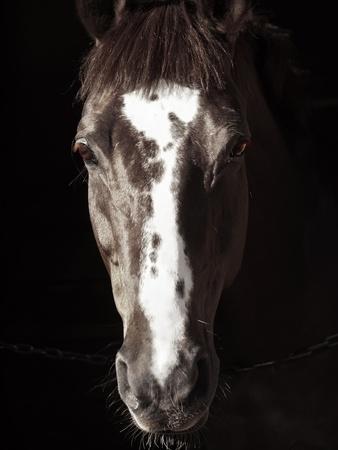 portrait of beautiful horse in dark sunny day Stock Photo - 13304375
