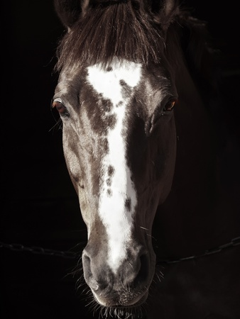 portrait of beautiful horse in dark sunny day Stock Photo - 13304375