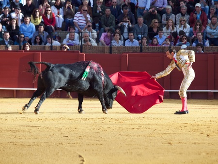 SEVILLA -MAY 20: Novilladas in Plaza de Toros de Sevilla. Novillero: Emilio Huertas. May 20, 2012 in Sevilla (Spain)  Stock Photo - 13789419