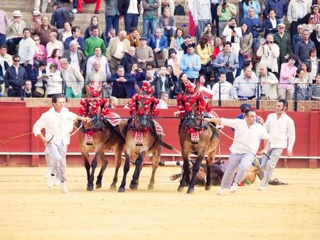 SEVILLA -MAY 20: Novilladas in Plaza de Toros de Sevilla.May 20, 2012 in Sevilla (Spain)  Stock Photo - 13790006