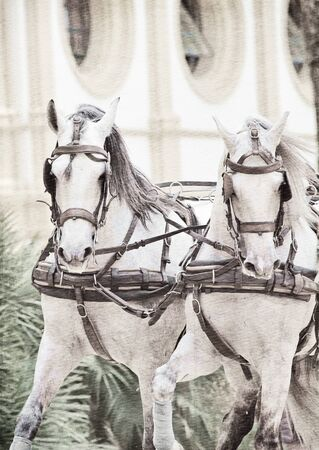 art ancient potrait of wonderful carriage white horses in movement in Jeres,  Spain photo