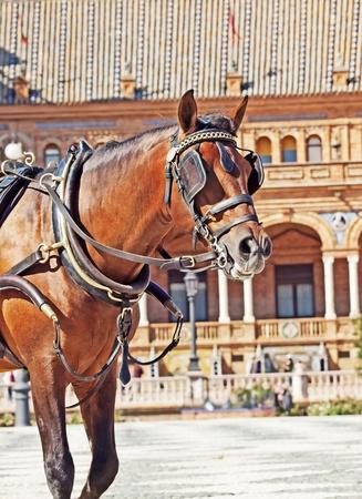 portrait of carriage bay horse in Seville  Plaza de Espana ,  Spain photo