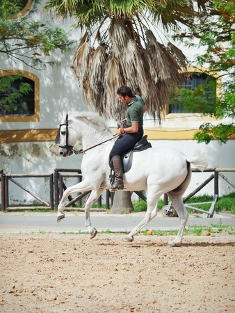 Jerez-17 MAY: rider on spanish white speckled horse in The Royal Andalucían School of Equestrian Art on demonstration performance. May 17,2012 in Jerez, Spain