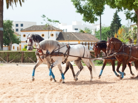 four beautiful horse-drawn in Andalusia,  Spain photo