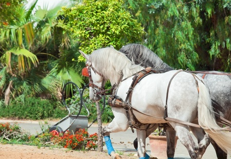 beautiful horse-drawn in Andalusia,  Spain photo