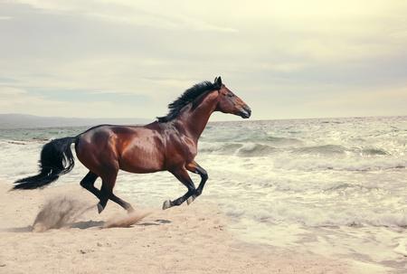 horse show: wonderful marine landscape with beautiful bay horse