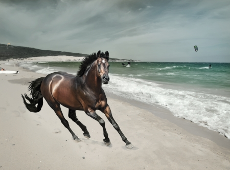 galloping bay sportive breed  horse at sea beach Stock Photo