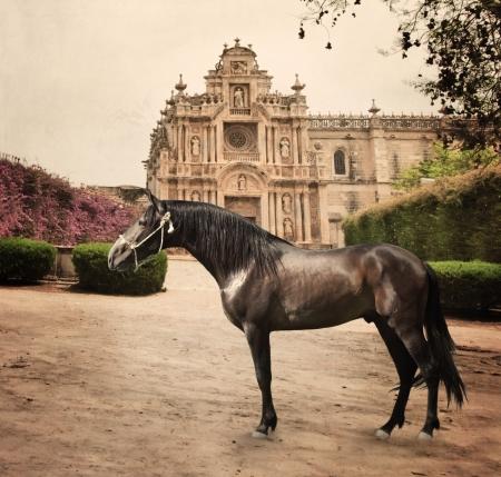 origen animal: Caballo andaluz frente beginnin monasterio de raza Andalucía, España Foto de archivo