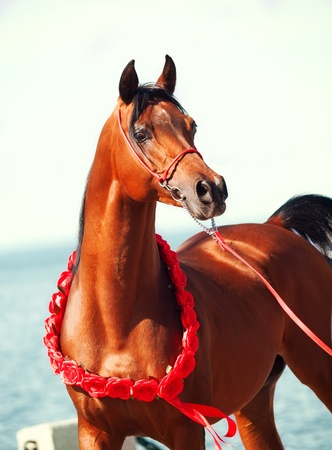 purebred  arabian stallion portrait on the sea background Stock Photo - 19508806