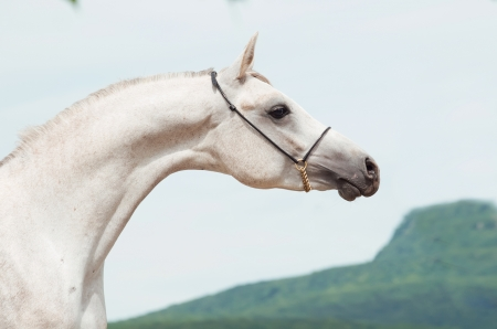 Porträt der jungen weißen Show arab am Himmel Hintergrund