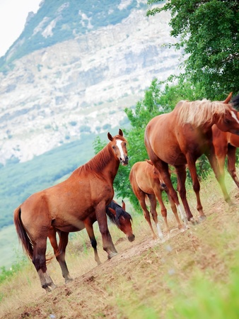herbal knowledge: herd of mares in the pasture  cloudy day