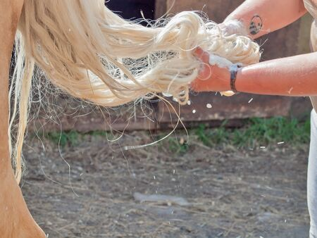 horse tail: horse tail washing