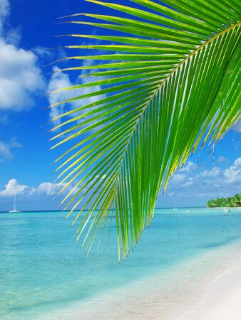 tropical beach in Dominican republic  Caribbean sea Stock Photo